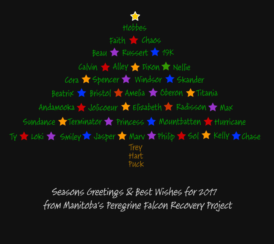 2016 Seasonal Greeting Card